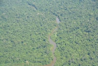 24-INMD-Floresta_amazonica_na_Terra_Indigena_Yanomami.jpg